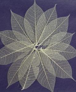 Natural Skeleton Leaves