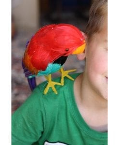 There's a Parrot on my Shoulder