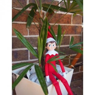 Elf on the Shelf Spots